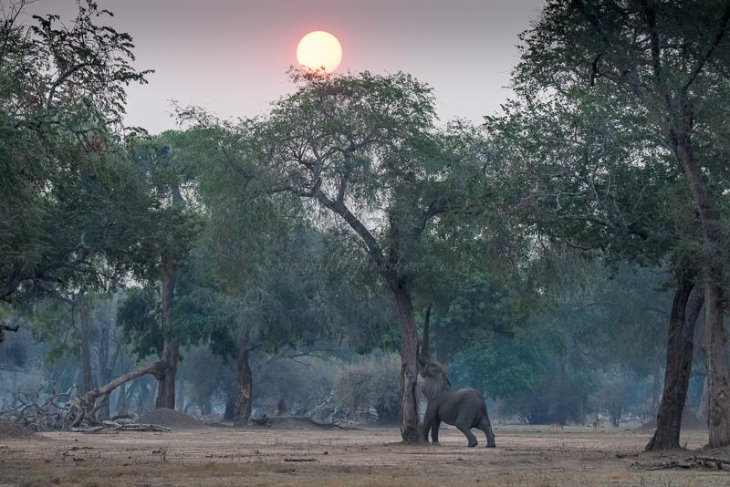 Masai Mara (11 of 17)