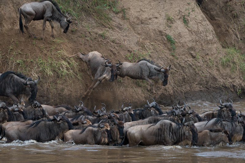 Masai Mara (42 of 75)