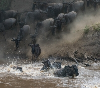 Masai Mara (67 of 75)