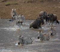 Masai Mara (31 of 75)