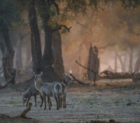 Mana Pools (14 of 24)