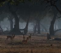 Masai Mara (2 of 17)