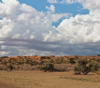 kalahari-landscape-with-clouds