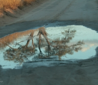 Reflections on Kgalagadi Transfrontier Park