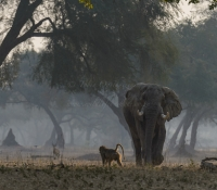 Mana Pools (26 of 40)