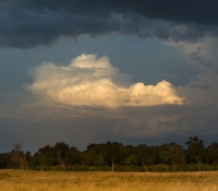 Masai Mara (8 of 75)