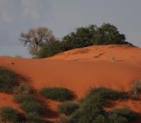 kalahari-red-dune