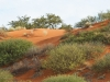 kalahari-red-dunes-close
