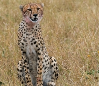 Masai Mara (37 of 75)