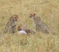 Masai Mara (38 of 75)