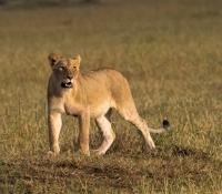 Masai Mara (23 of 75)