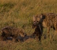 Masai Mara (3 of 75)