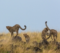 Masai Mara (57 of 75)