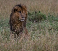 Masai Mara (58 of 75)