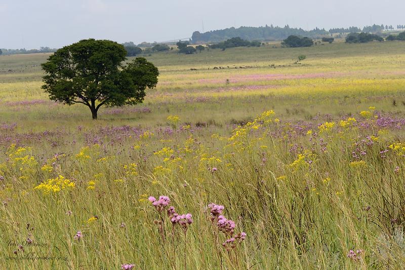 Landscape of Rietvlei grassland