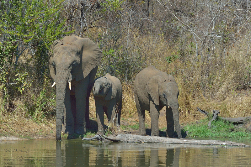 KNP Aug_2013_01837