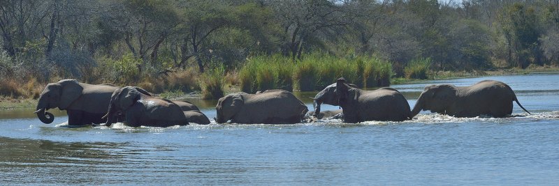 KNP Aug_2013_01863