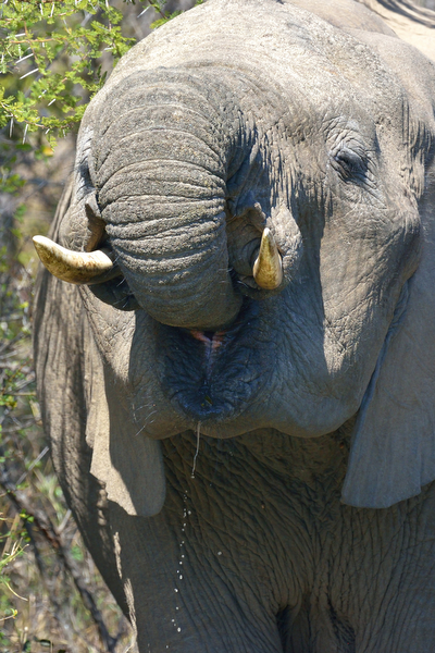 KNP Aug_2013_02127