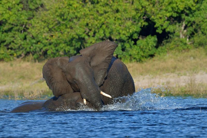 CNP Safari April 2014