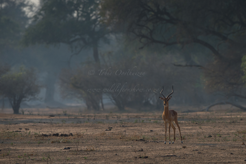 Mana Pools (3 of 40)