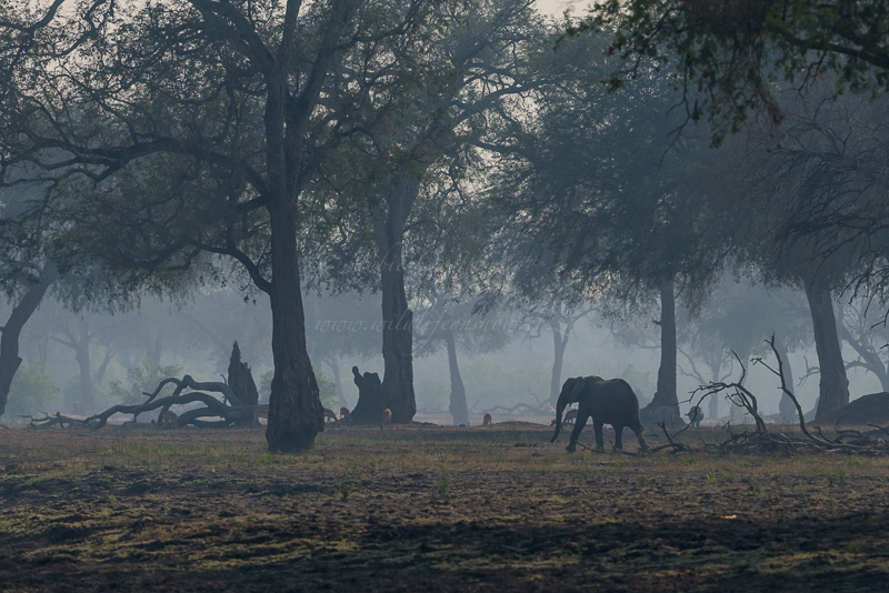 Mana Pools (40 of 40)