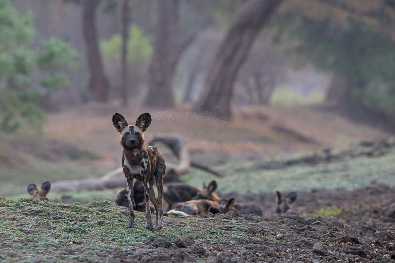 Mana Pools (9 of 40)