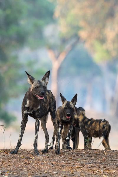 Masai Mara (11 of 12)