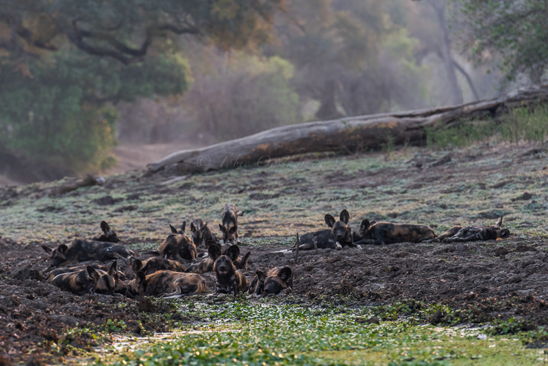 Masai Mara (2 of 12)