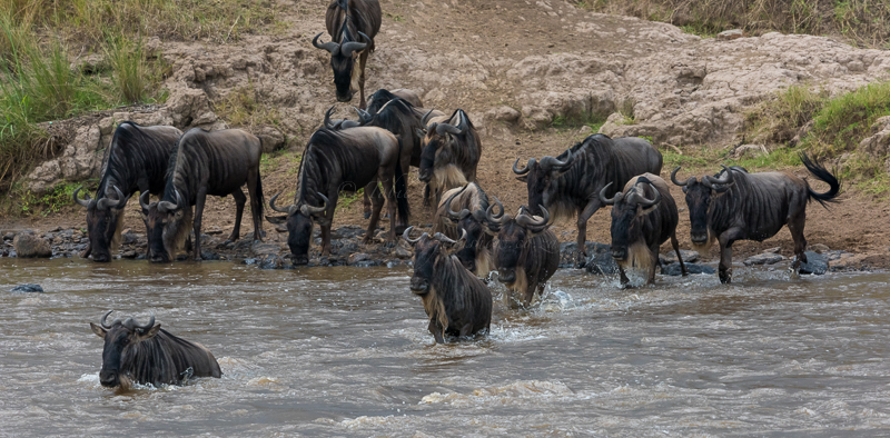 Masai Mara (29 of 75)