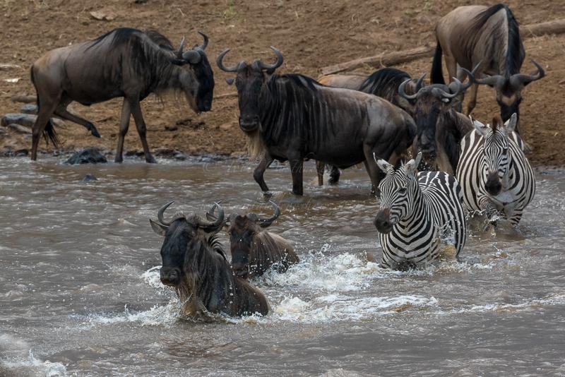 Masai Mara (30 of 75)