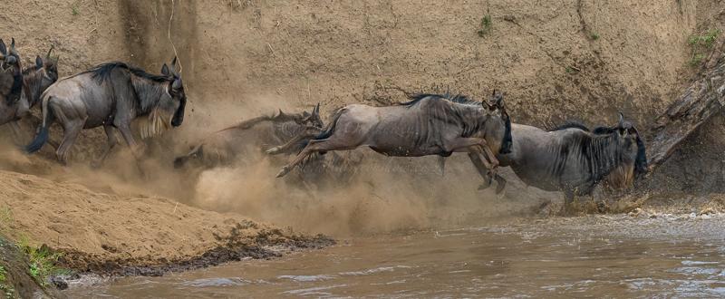 Masai Mara (43 of 75)