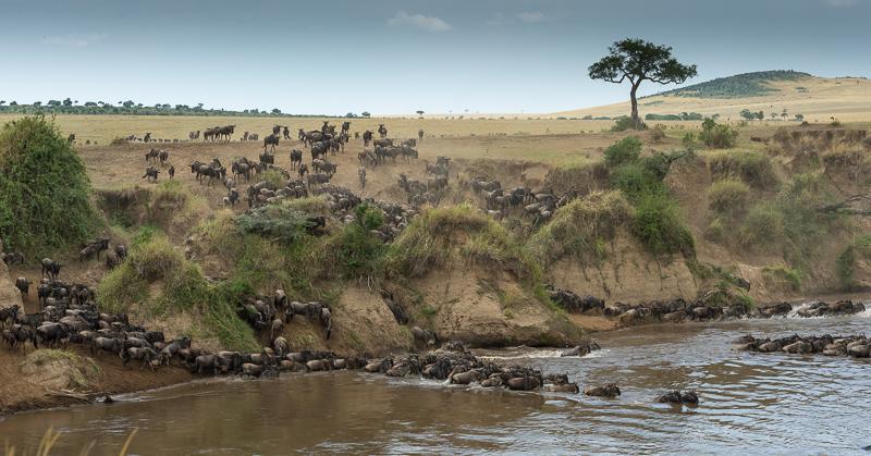 Masai Mara (45 of 75)