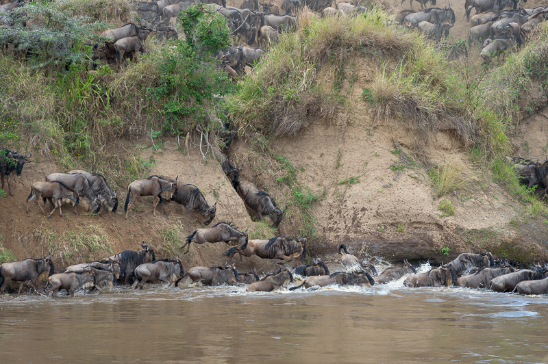 Masai Mara (46 of 75)