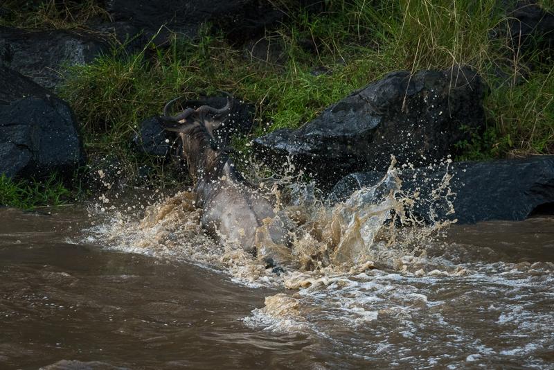 Masai Mara (48 of 75)