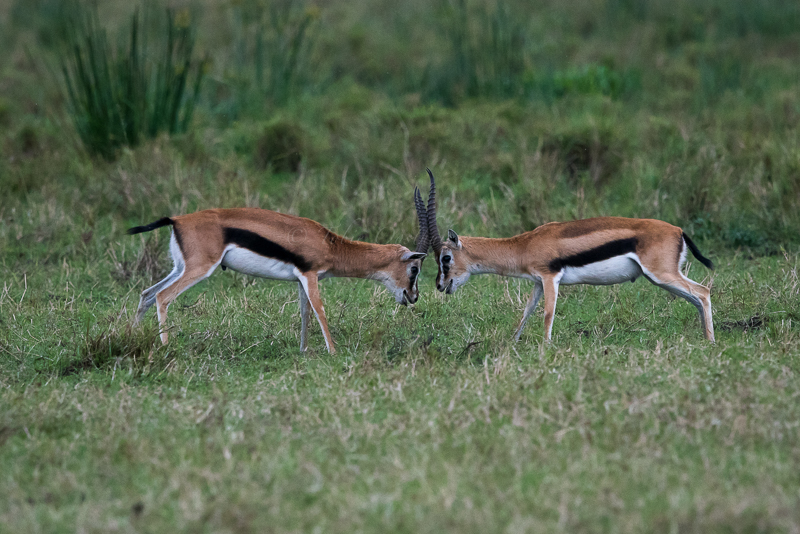 Masai Mara (55 of 75)