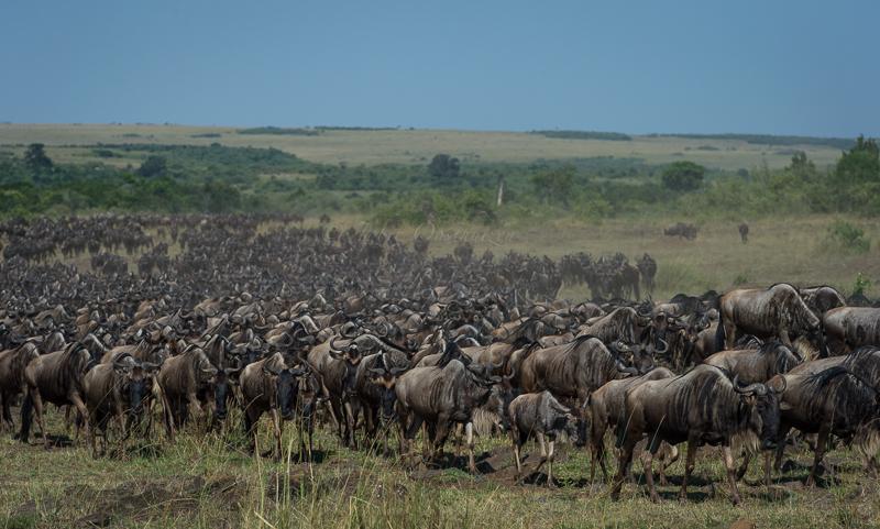 Masai Mara (62 of 75)