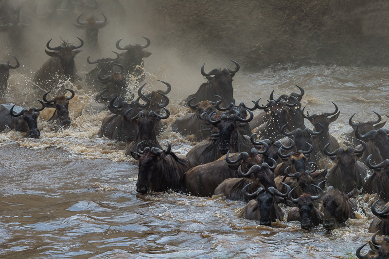 Masai Mara (65 of 75)
