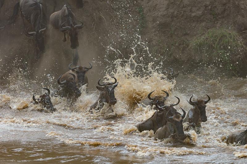 Masai Mara (66 of 75)