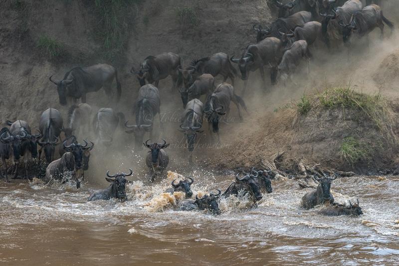 Masai Mara (68 of 75)