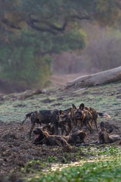 Masai Mara (7 of 12)