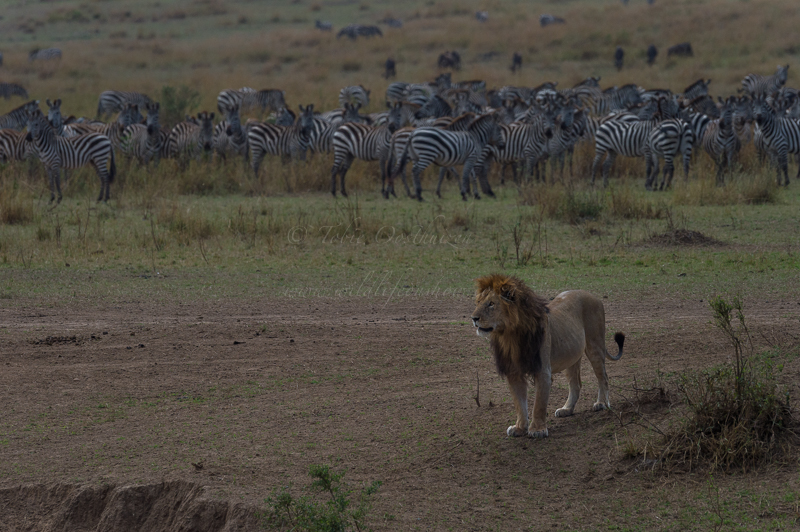 Masai Mara (71 of 75)
