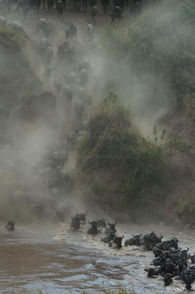 Masai Mara (73 of 75)