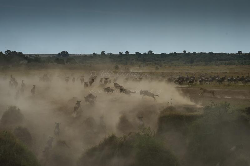 Masai Mara (74 of 75)