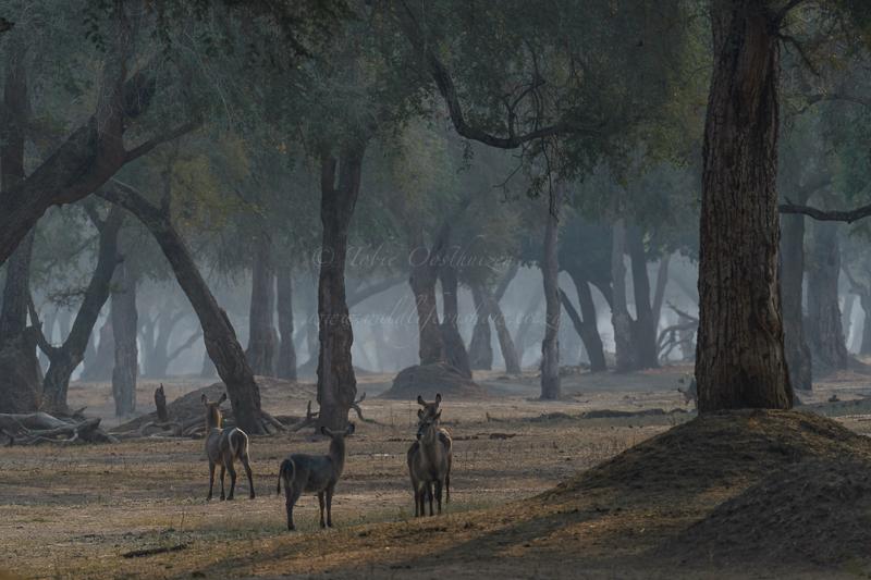 Masai Mara (9 of 17)