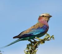 Kruger National Park Jan 2013