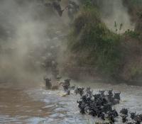 Masai Mara (72 of 75)