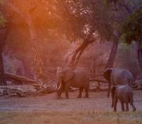Masai Mara (16 of 17)