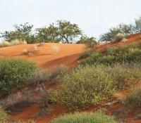 kalahari-red-dunes-close